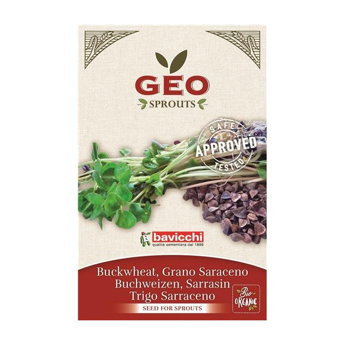 Trigo-Sarraceno - Sementes Para Germinar Bio